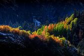Sun light on autumn trees — Stock Photo