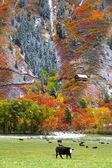 Scenic Rural Colorado — Stock Photo