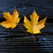 Two maple leaves — Stock Photo #34698995
