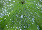 Water drops on the leaf — Stock Photo