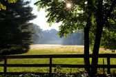 Summer morning — Stock Photo