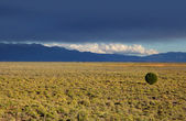 Colorado plains — Stock Photo