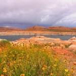 Lake Powell recreation area — Stock Photo #47860203