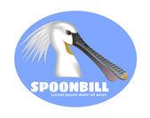 Spoonbill bird — Stock Photo