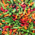 Fresh multicolored chili peppers — Stock Photo