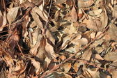 Dry leaves on ground — Stock Photo