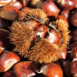 Stock Photo: Chestnuts