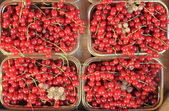 Fresh ripe currant — Stock Photo