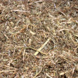 Stock Photo: Forage-based dry straw