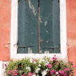 Old window with flower pots — Stok fotoğraf