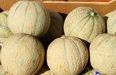 Fresh melons — Stock Photo