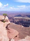 Vue panoramique de canyonlands — Photo