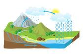 Vektör şema doğada su döngüsü — Stok Vektör