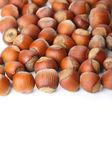 Hazelnuts on white surface — Stock Photo
