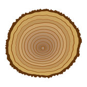 Cross section of tree stump — Stock Vector
