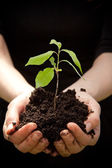 Hands holding young plant — Stock Photo
