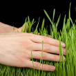 Hand above green grass — Stock Photo #40534233