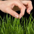 Hand above green grass — Stock Photo #40534327
