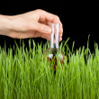 Hand with a test tube and grass. Fertilizer — Stock Photo #40538229