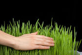 Hand above green grass — Stock Photo