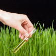 Hand with test tube and grass. Fertilizer — Stock Photo #41468729