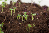 Young green sprouts — Stock Photo