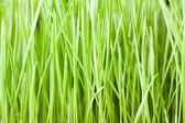 Färskt grönt gräs bakgrund — Stockfoto
