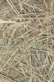 Straw background — Stockfoto