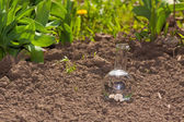 Bulb with clear water on dry soil — Stock Photo