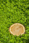 Tree stump on the grass, top view — Stock Photo