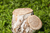 Tree stump on the grass — Stock Photo