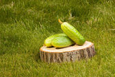 Cucumbers on a tree stump — Stock Photo
