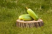 Cucumbers on a tree stump — Stock Photo