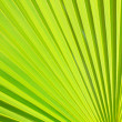 Palm leaf — Stock Photo #32496587