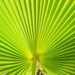 Palm leaf — Stock Photo #32496623