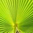 Palm leaf — Stock Photo