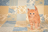 Ginger Kitten on Quilted Background — Stock Photo