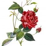Flower illustration — Stock Photo #14813169