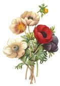 Blomma illustration — Stockfoto