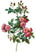 Flower illustration — Stock Photo