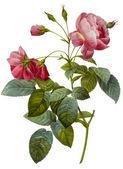 иллюстрация цветок — Стоковое фото