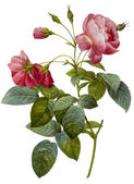 Ilustracja kwiat — Zdjęcie stockowe