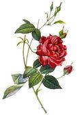 Ilustración de la flor — Foto de Stock