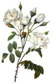çiçek şekil — Stok fotoğraf