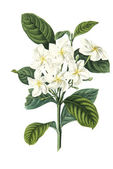 Color illustration of flowers in watercolor paintings — 图库照片