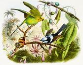 Pássaro colorido com fundo — Foto Stock