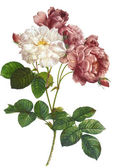 Květinové ilustrace — Stock fotografie