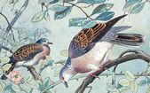Bird old illustration — Stock Photo