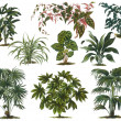 Old botanic illustration — Stock Photo #18580939