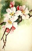 Ilustración de las flores — Foto de Stock